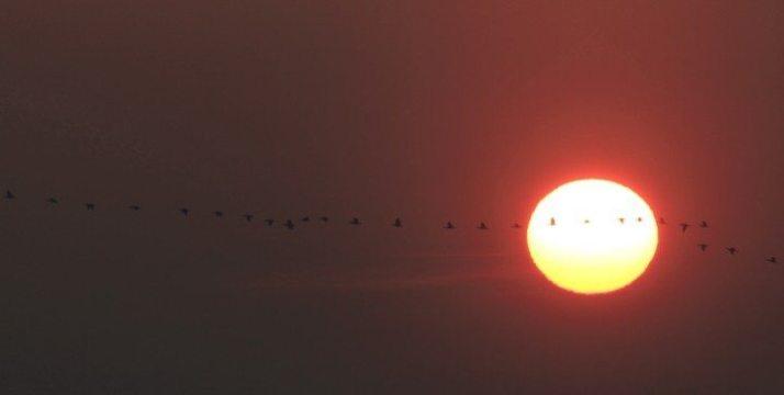 Crane Spring Migration