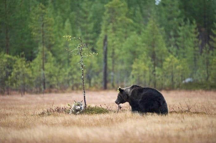 Extraordinary friendship in Finnland