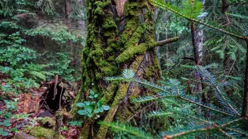 Gorgany Strict Nature Reserve