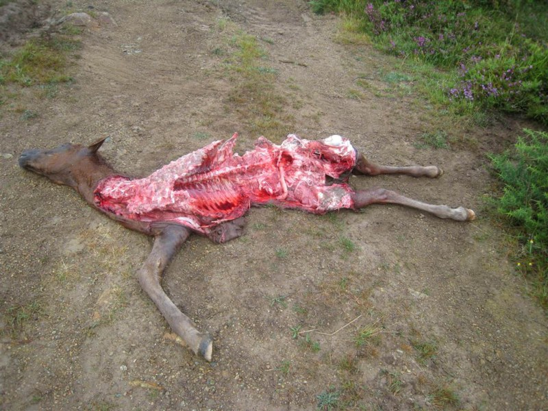 Fapas Astruais Livestock Protection-21994.JPG