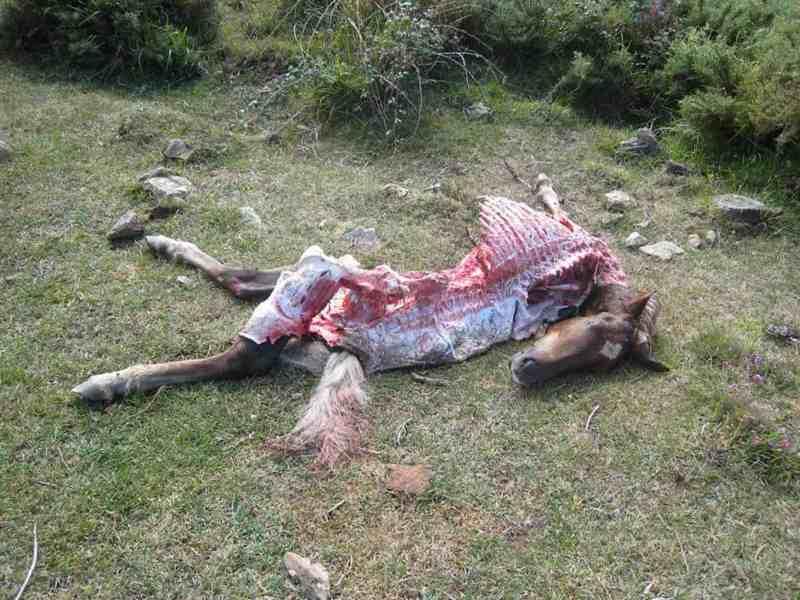 Fapas Astruais Livestock Protection-21995.JPG