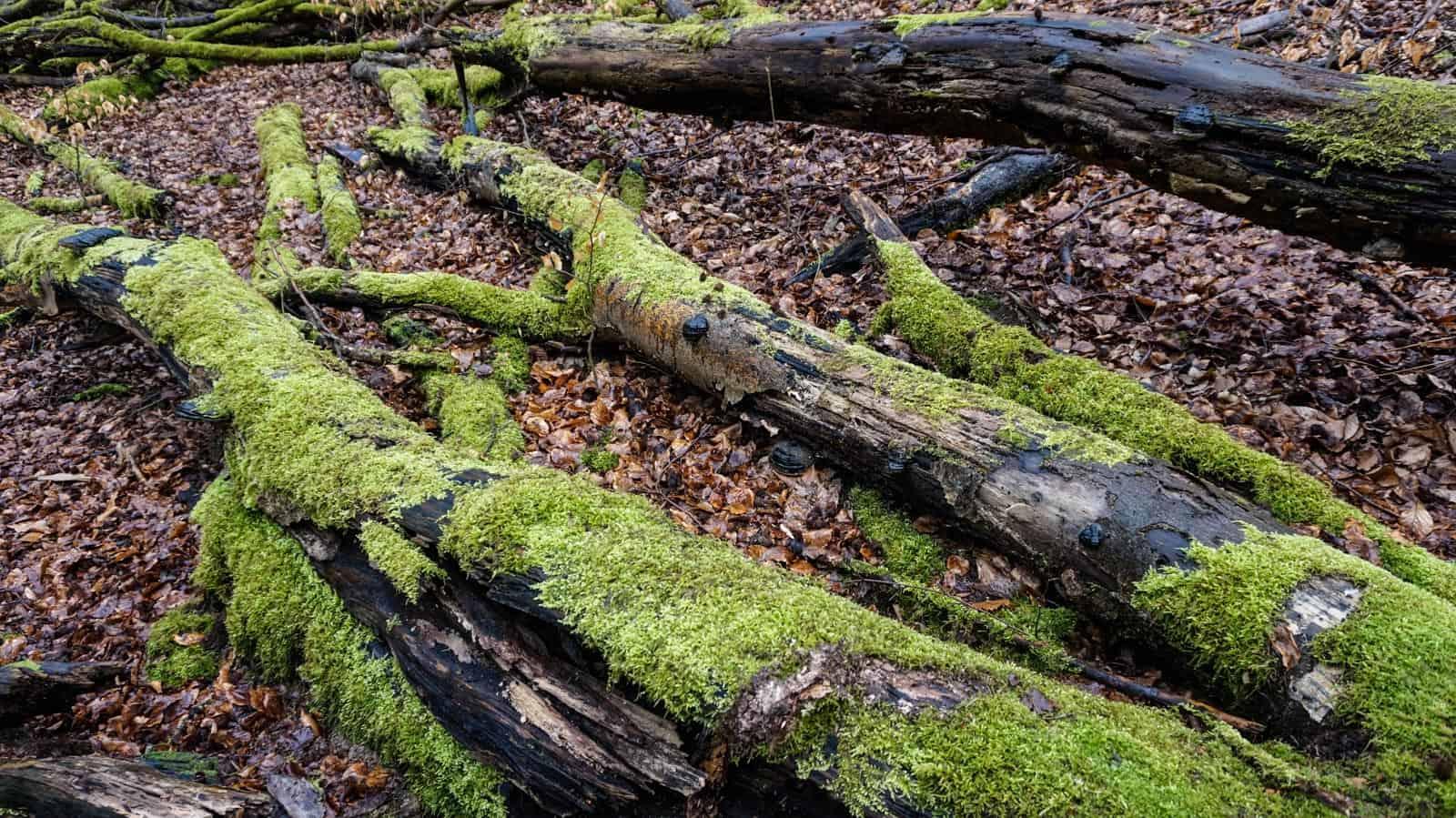 Hainich Wilderness