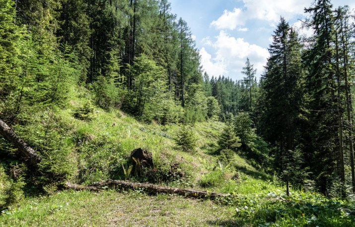 Kalkalpen Wilderness © All rights reserved