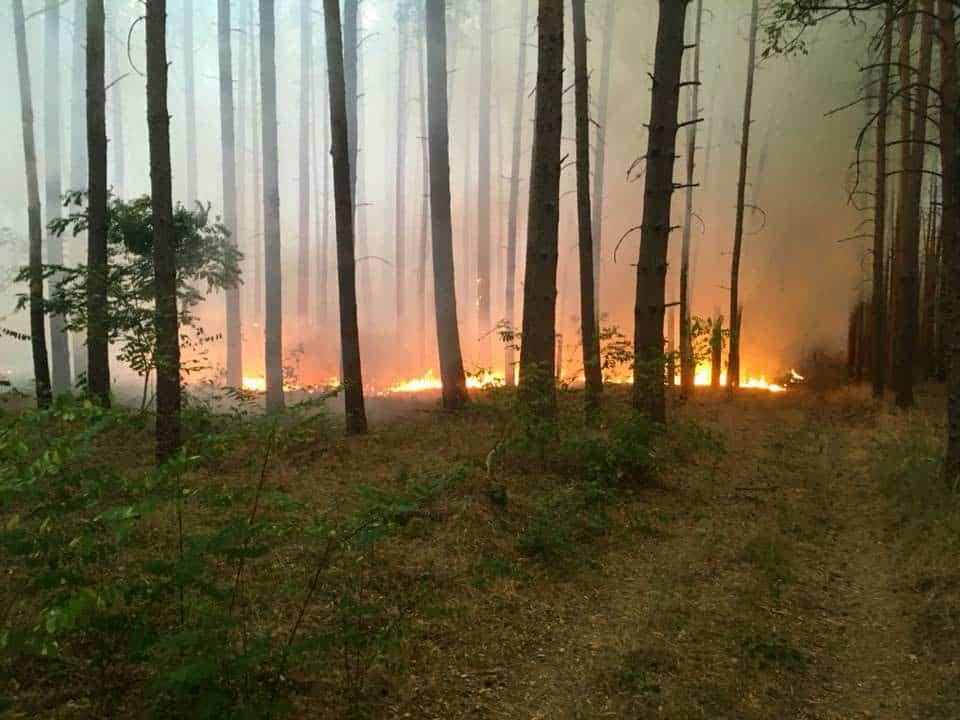 Forest Fire Treuebrietzen Brandenburg-22601 © Feuerwehr Bad Belzig