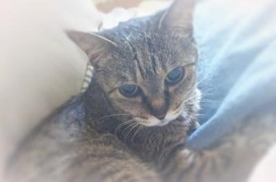 じっと佇み、愛猫を抱きしめながら、思い浮かんできたもの
