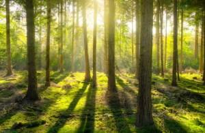 s_森と太陽の光