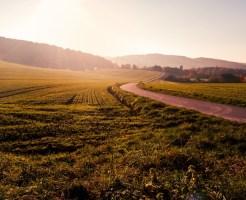 爽快な草原と光