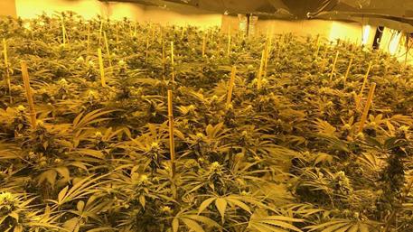 Британская милиция нашла крупную плантацию марихуаны вядерном бункере