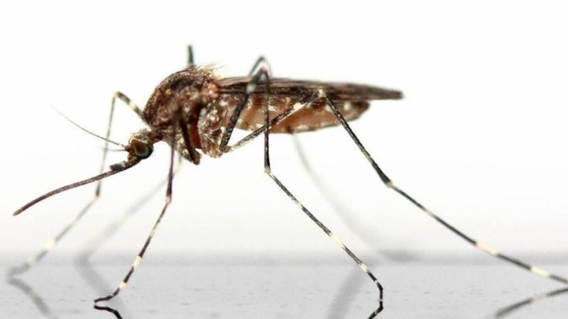 Компания, финансируемая Биллом Гейтсом, занимается выпуском генетически модифицированных комаров во Флориде, сообщают СМИ