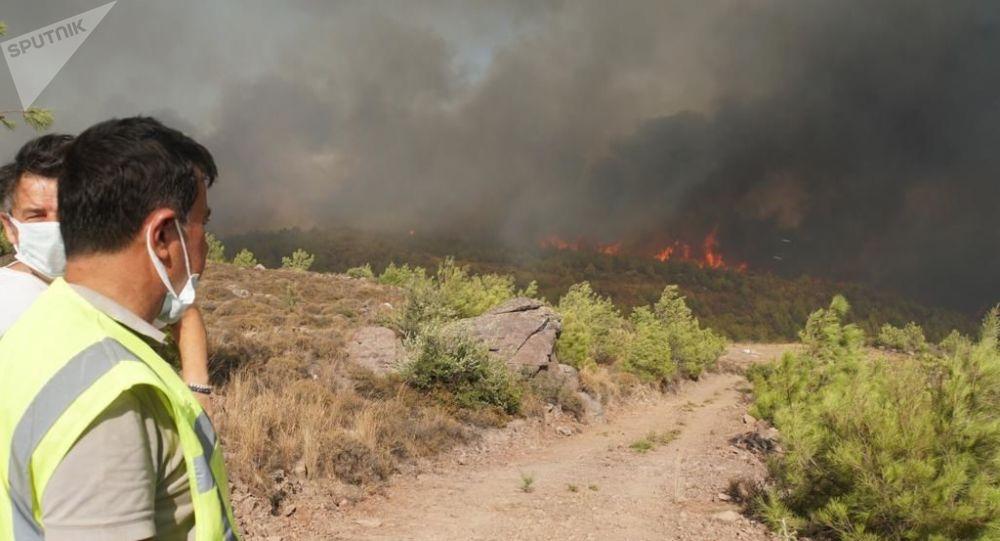 Эрдоган: Турция задержала подозреваемого в поджоге лесов