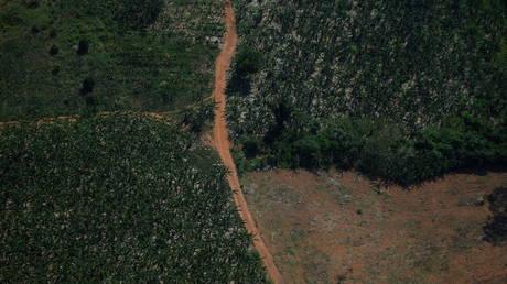 Активисты-экологи вызывают президента Бразилии Болсонару в МУС по поводу «преступлений против человечности» за уничтожение Амазонки