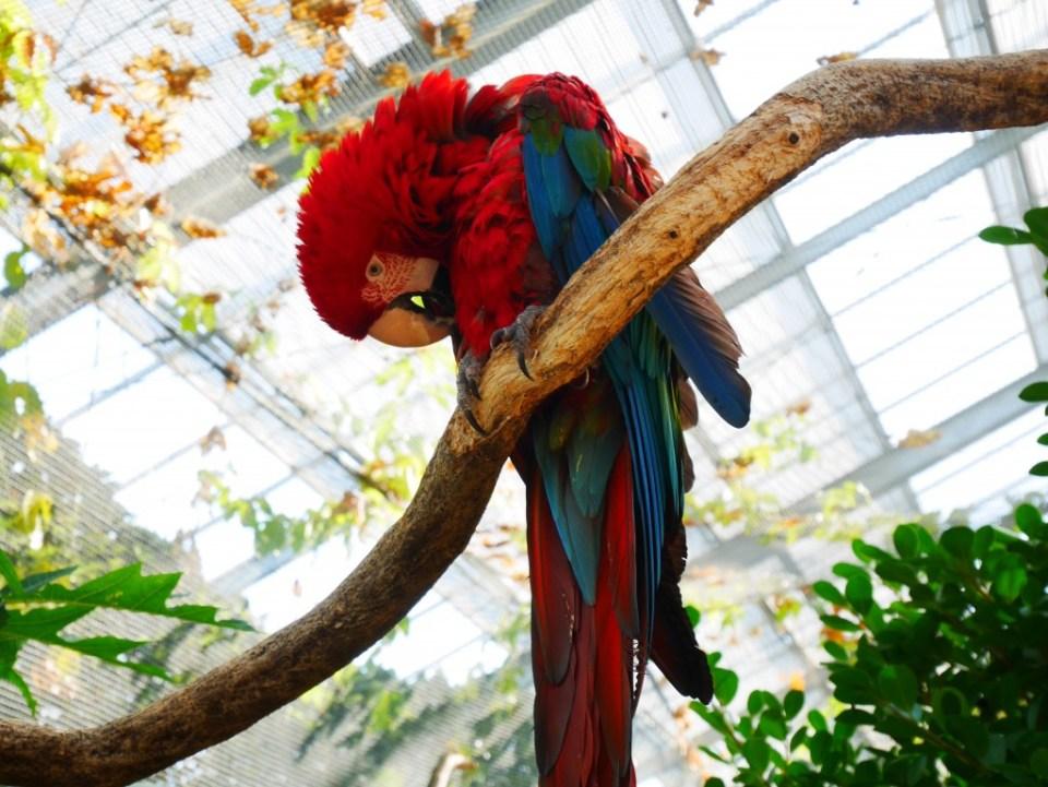 Magnifique plumage d'un perroquet
