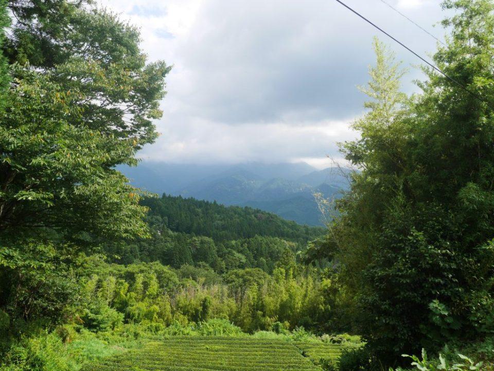 Entre champs de thé et montagnes