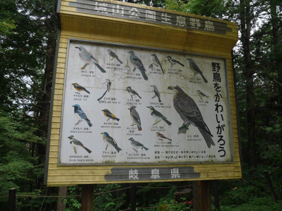 Les différents oiseaux que l'on peut observer dans la forêt de Shirayama
