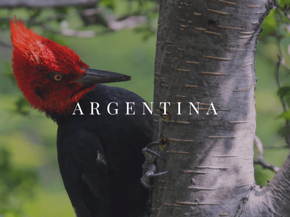 Argentina AFQ