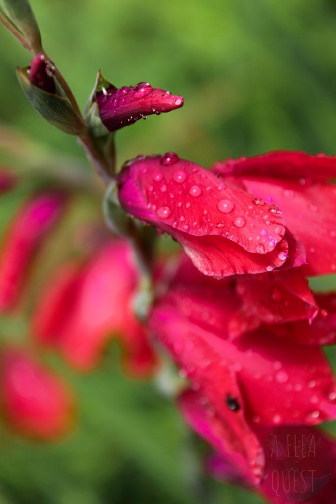 Fleurs fermées arrosées par la rosée à l'aube
