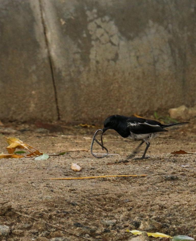 Et paf, un autre oiseau bien placé !