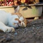 イビキを防止したいならまくらで対策!枕の高さでいびきが改善する驚きの理由。