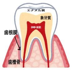 飲み物で歯が溶ける理由