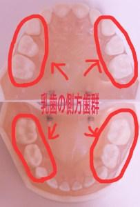乳歯の生え変わり