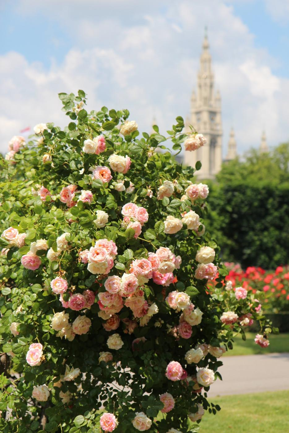 Miljoona ruusua