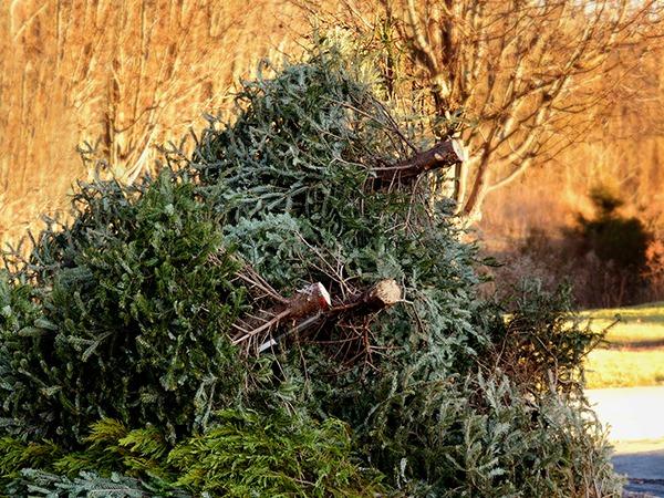 Yard Waste Removal Scranton/Wilkes-Barre