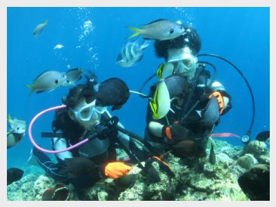沖縄体験ダイビング|餌付け無料