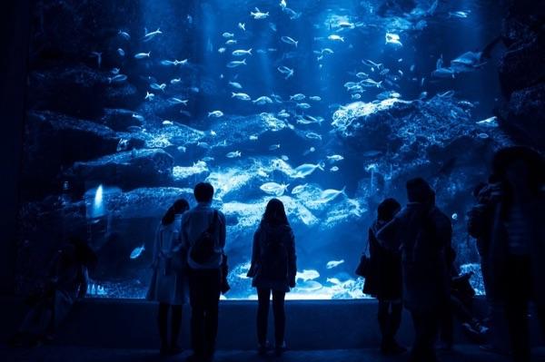 沖縄学割キャンペーン!美ら海体験ダイビング