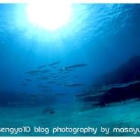 沖縄本島北部★ゴリラチョップにて癒やしの体験ダイビング