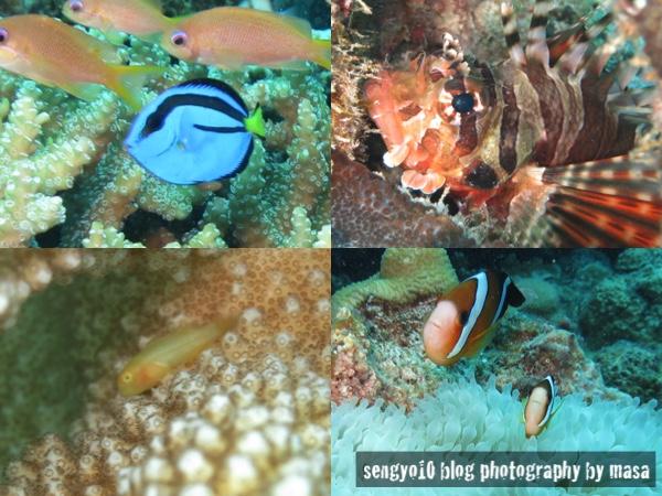 水納島の生物