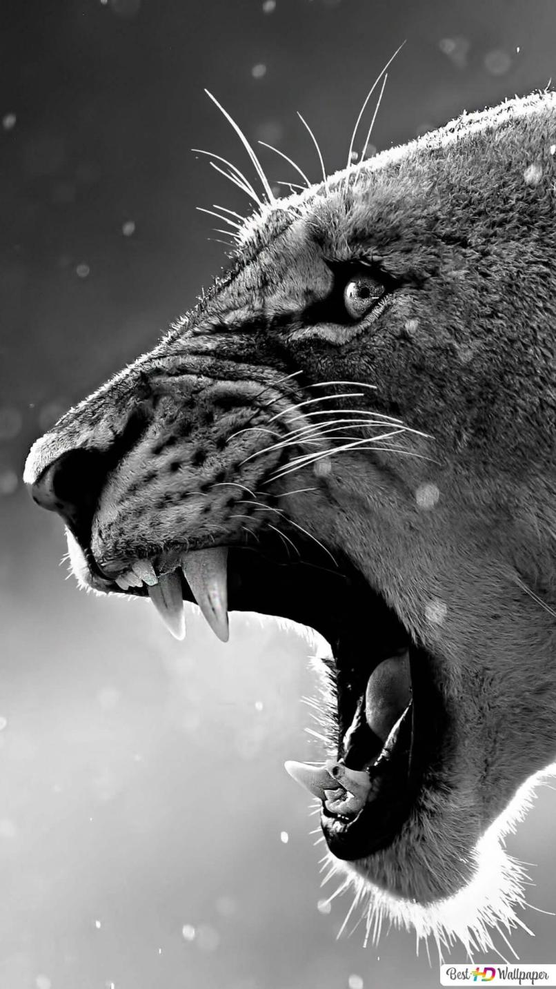Lion Wallpaper Iphone 7 Plus Hd The Galleries Of Hd Wallpaper