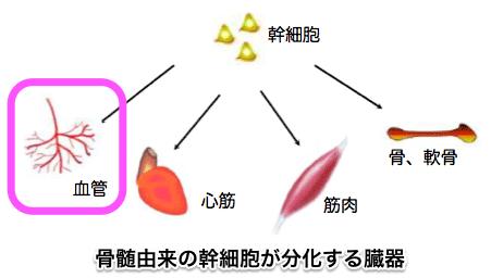 骨髄間葉系幹細胞