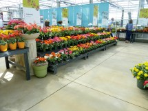 Greenhouse Display Benches Agri Of Virginia