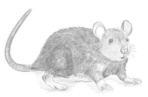 illustration animaux pau