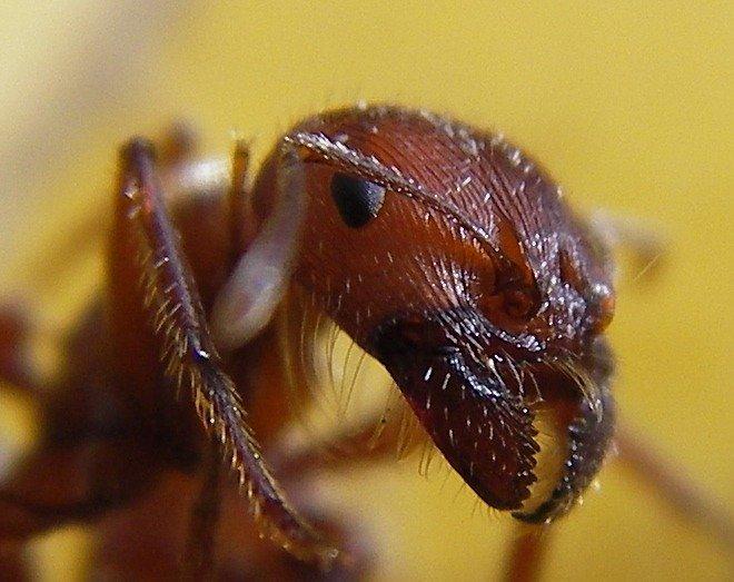 Ant Infographic