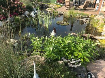 A Fish Pond With Many Plants