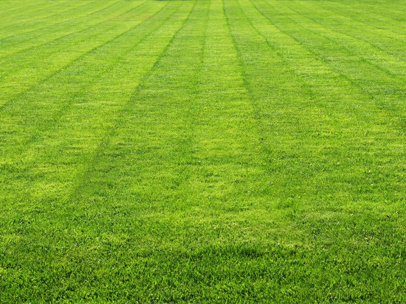 Lawn | A-Z Landscaping