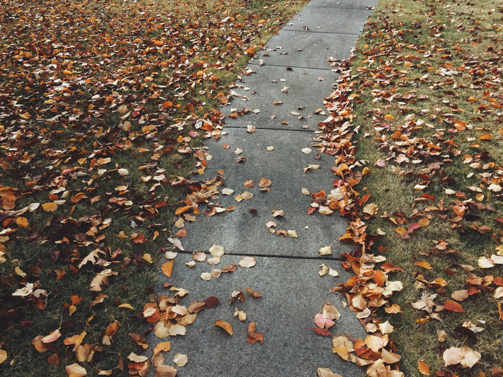 Fall Clean up - Leaf Removal - A-Z Landscaping