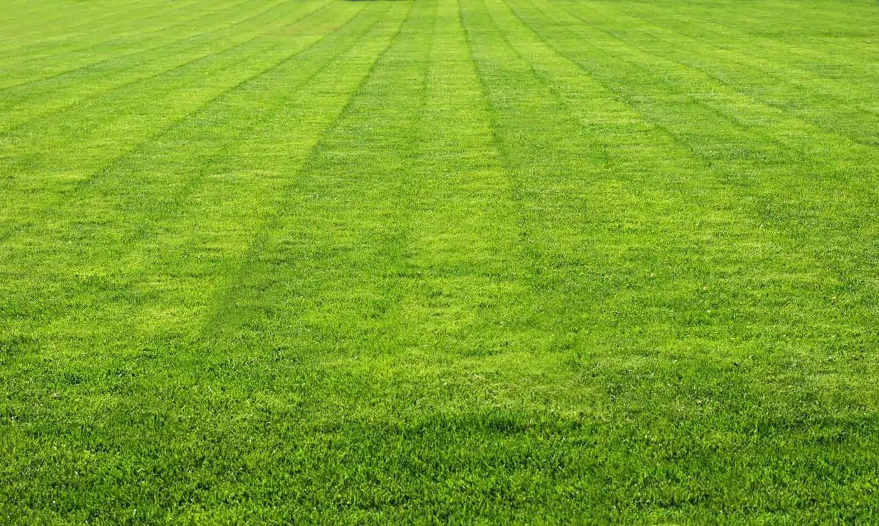 Green grass | A-Z Landscaping