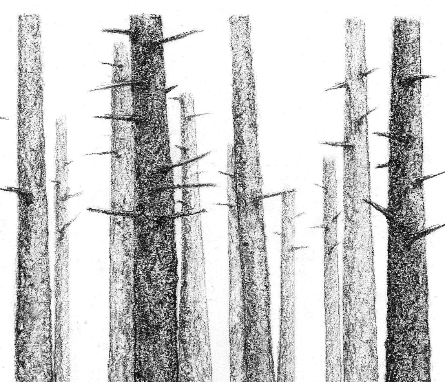 pine tree woods a