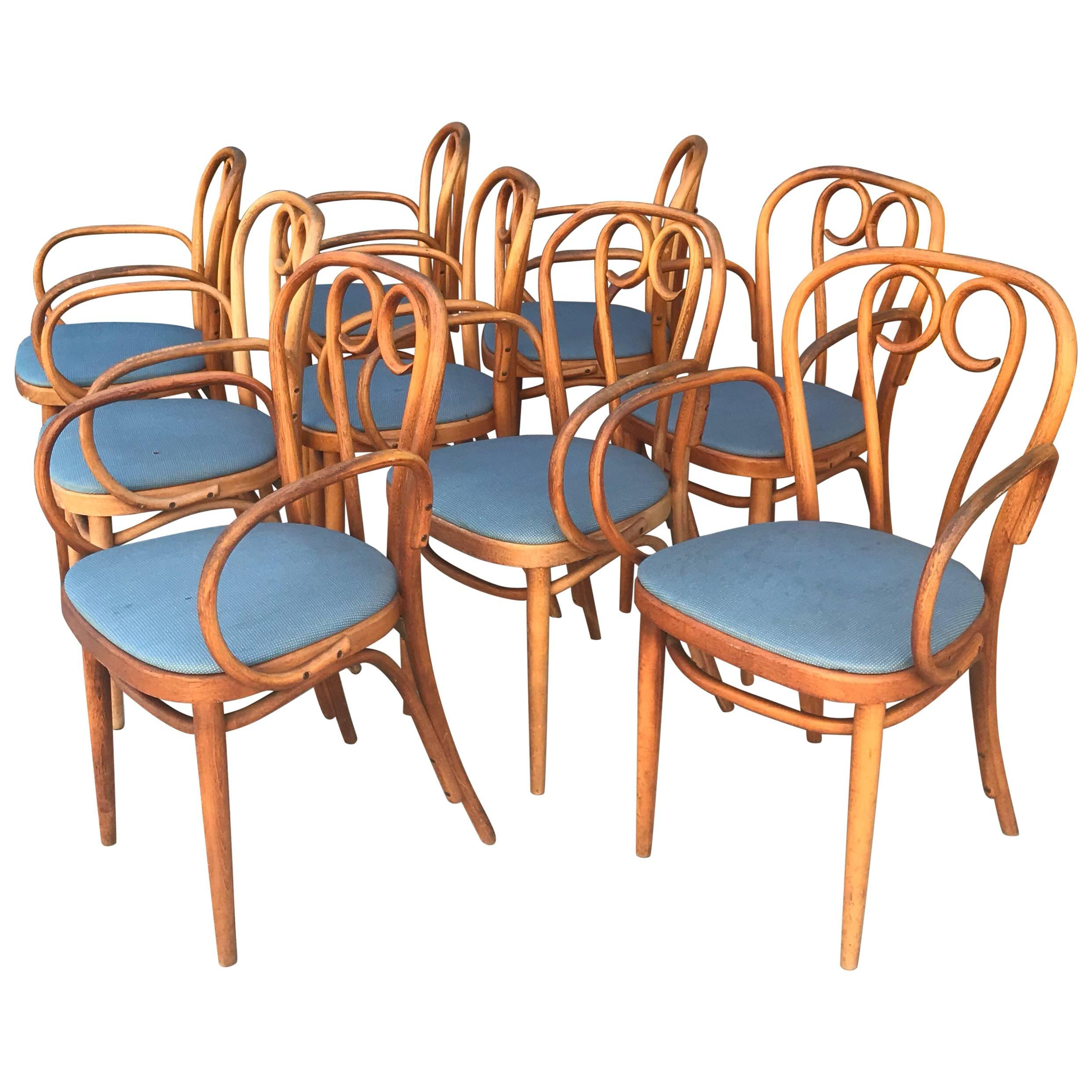 bentwood dining chair husk replica nine 9 thonet chairs at 1stdibs for sale