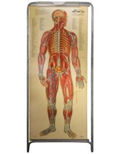 Medical anatomy chart titled  thin man also for sale at stdibs rh