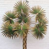 Very Nice Huge Palm Tree Lamp designed by Maison Jansen at ...