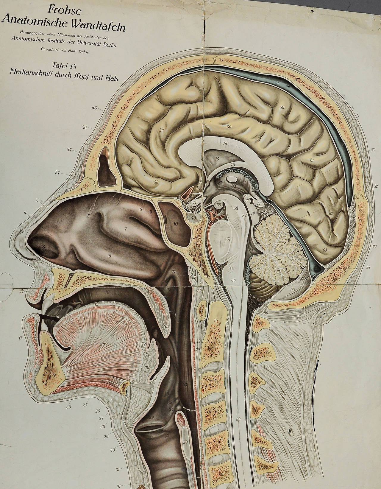 hight resolution of a great antique anatomical chart depicting the median incision of head and neck the chart