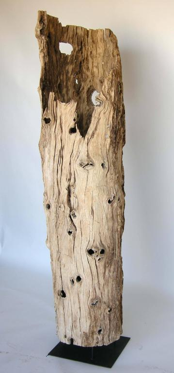 Large Driftwood Tree Trunk Sculpture at 1stdibs