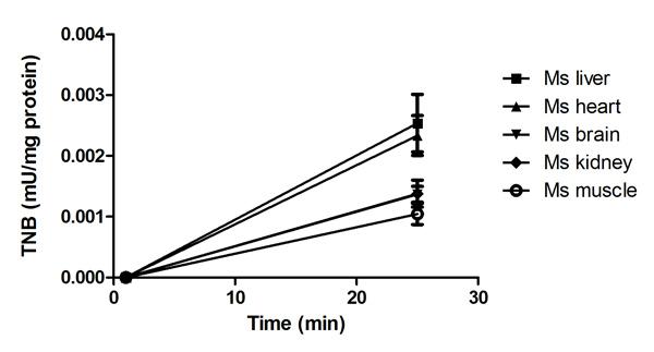 Thioredoxin Reductase Assay Kit (Colorimetric) (ab83463
