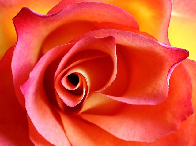 Stunning Flowers in CloseUp Macro Floral Photos  ABC News