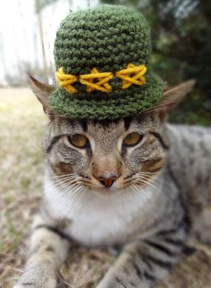 Image result for cats in hats