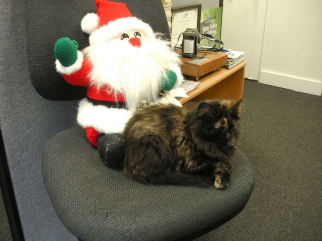 PHOTO: The stray kitten immediately made herself at home in her new office.