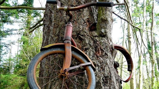 ht_bike_tree_tk_130102_wg.jpg